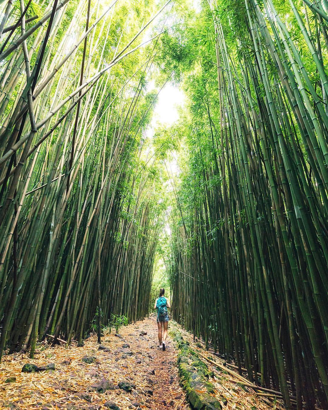 Bamboo Forest Maui - best things to do in maui hawaii
