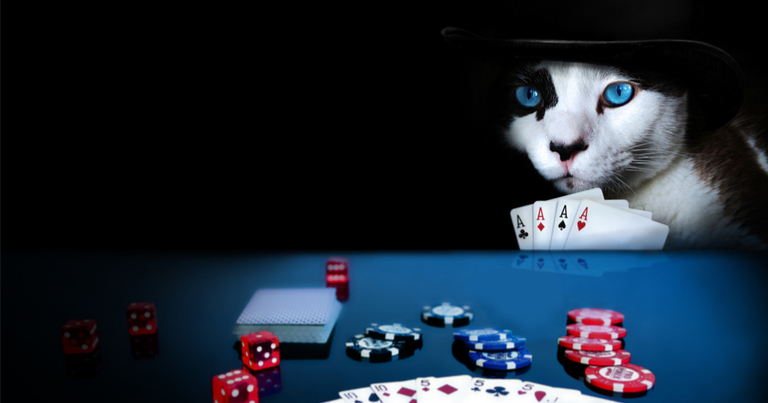 Gato usando un sombrero jugando al poker con cuatro ases en la mano