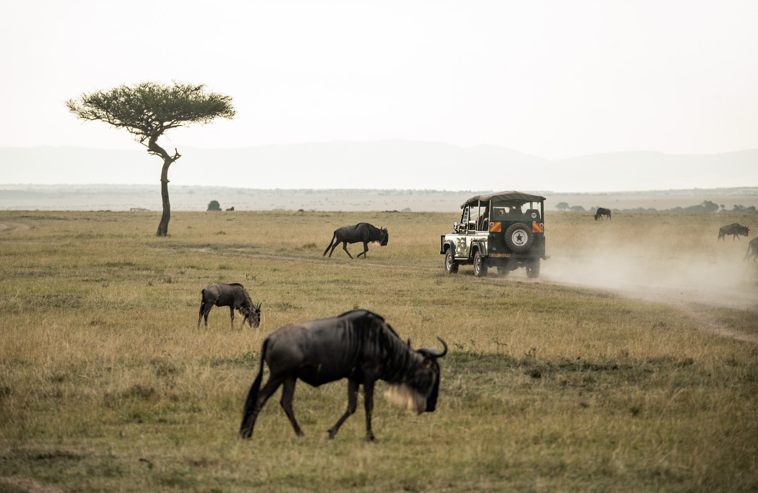 Masai Mara en Kenya