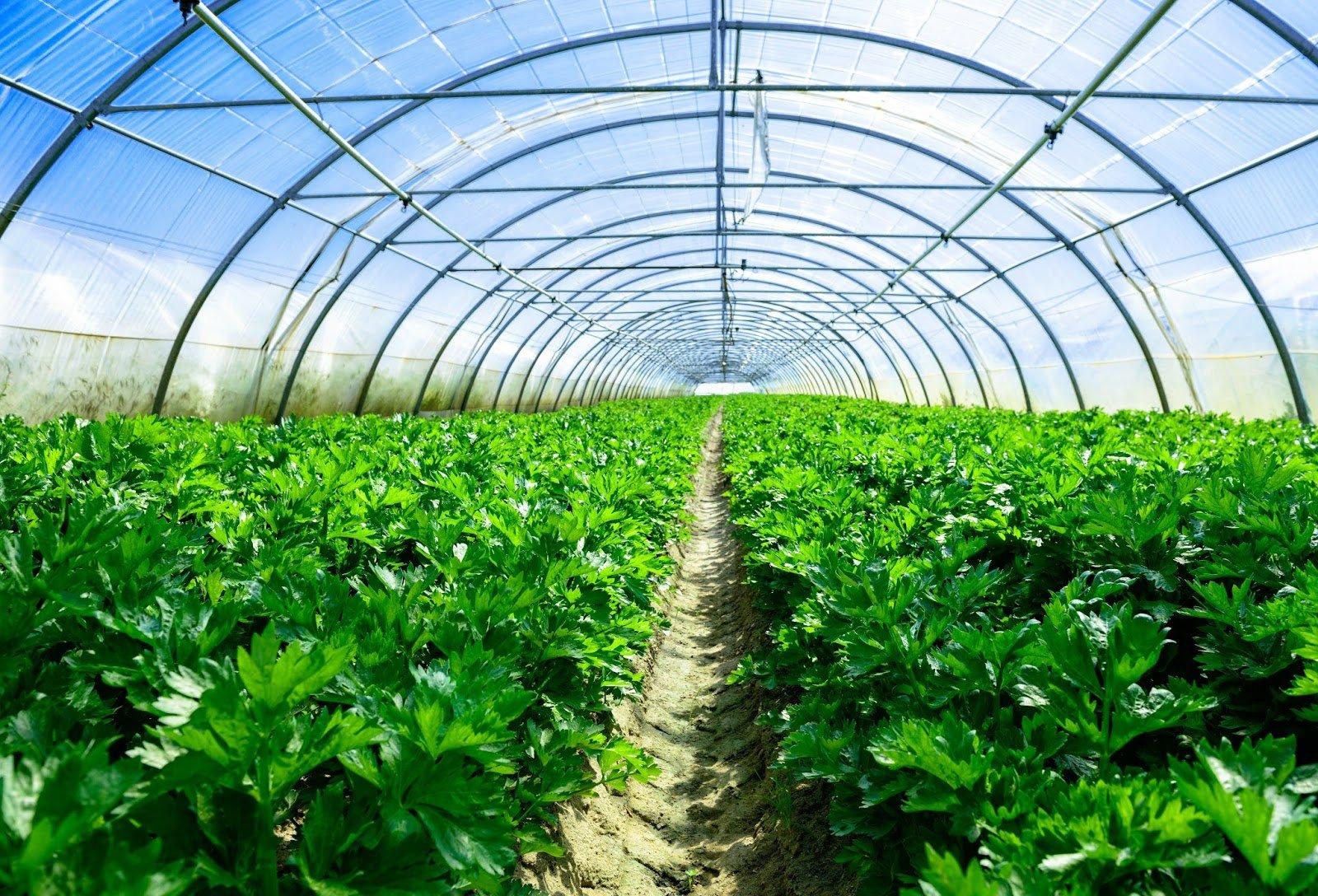 Nhà kính nông nghiệp sử dụng tấm lợp lấy sáng để ngăn chặn các tia cực tím gây hại cho cây trồng