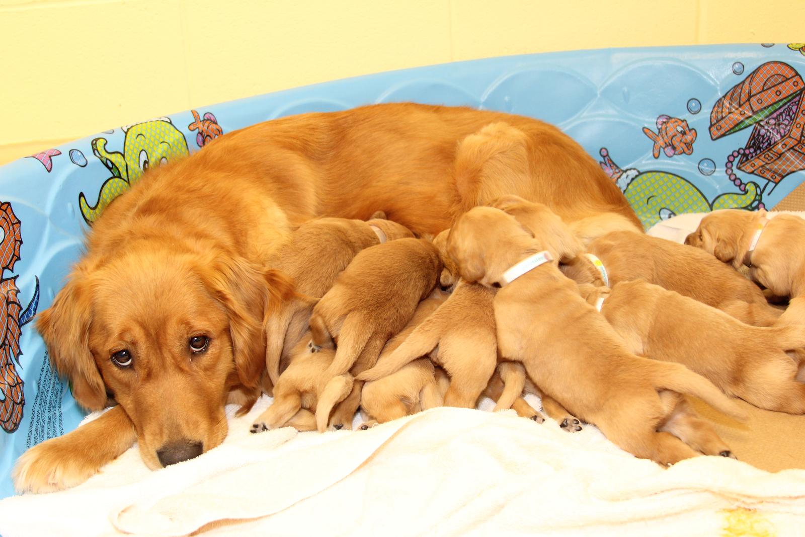 Nguyên nhân gây ra bệnh u mỡ ở chó