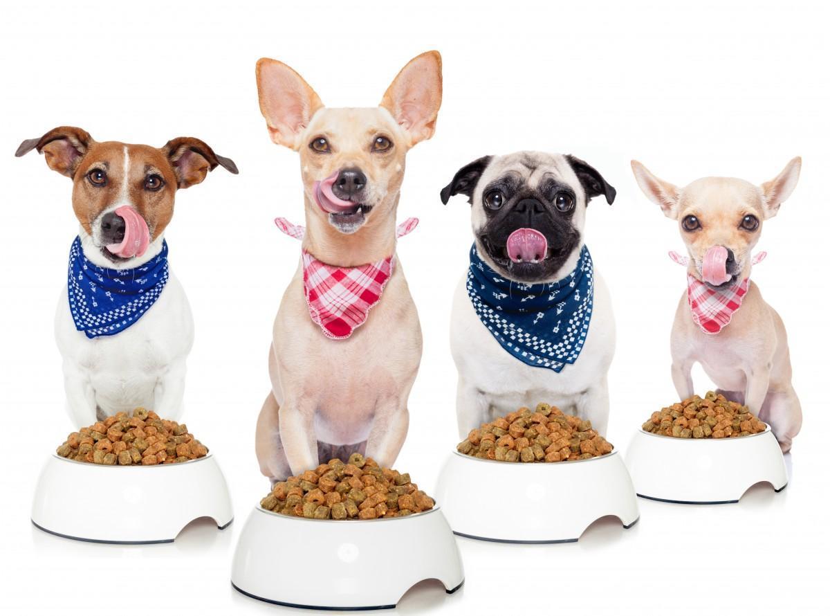 alimento-holístico-para-perros-de-diferentes-tipos