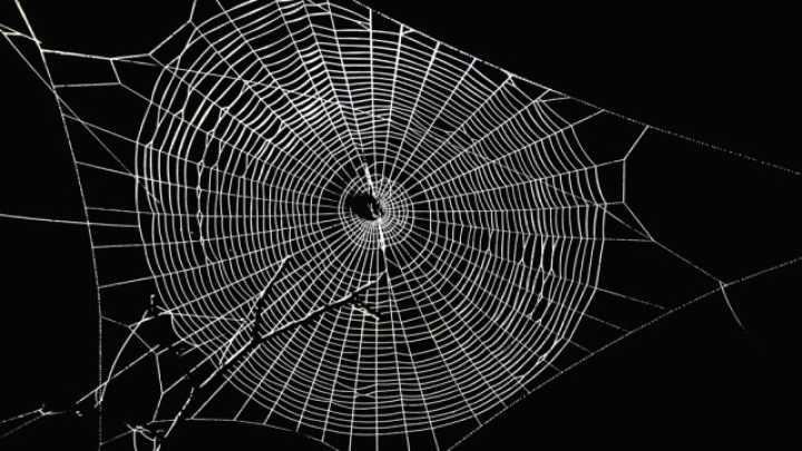 Image result for webs