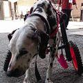 C:UsersuserDesktopTomomi2カット済み大型犬LL2輪352.jpg