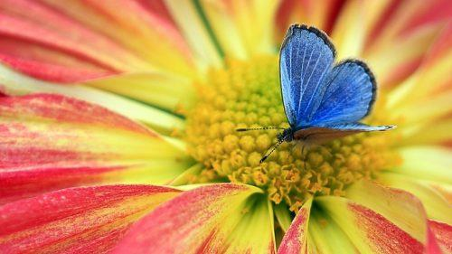C:\Users\Надежда\Desktop\butterfly_on_a_flower_pictures_2-500x281.jpg
