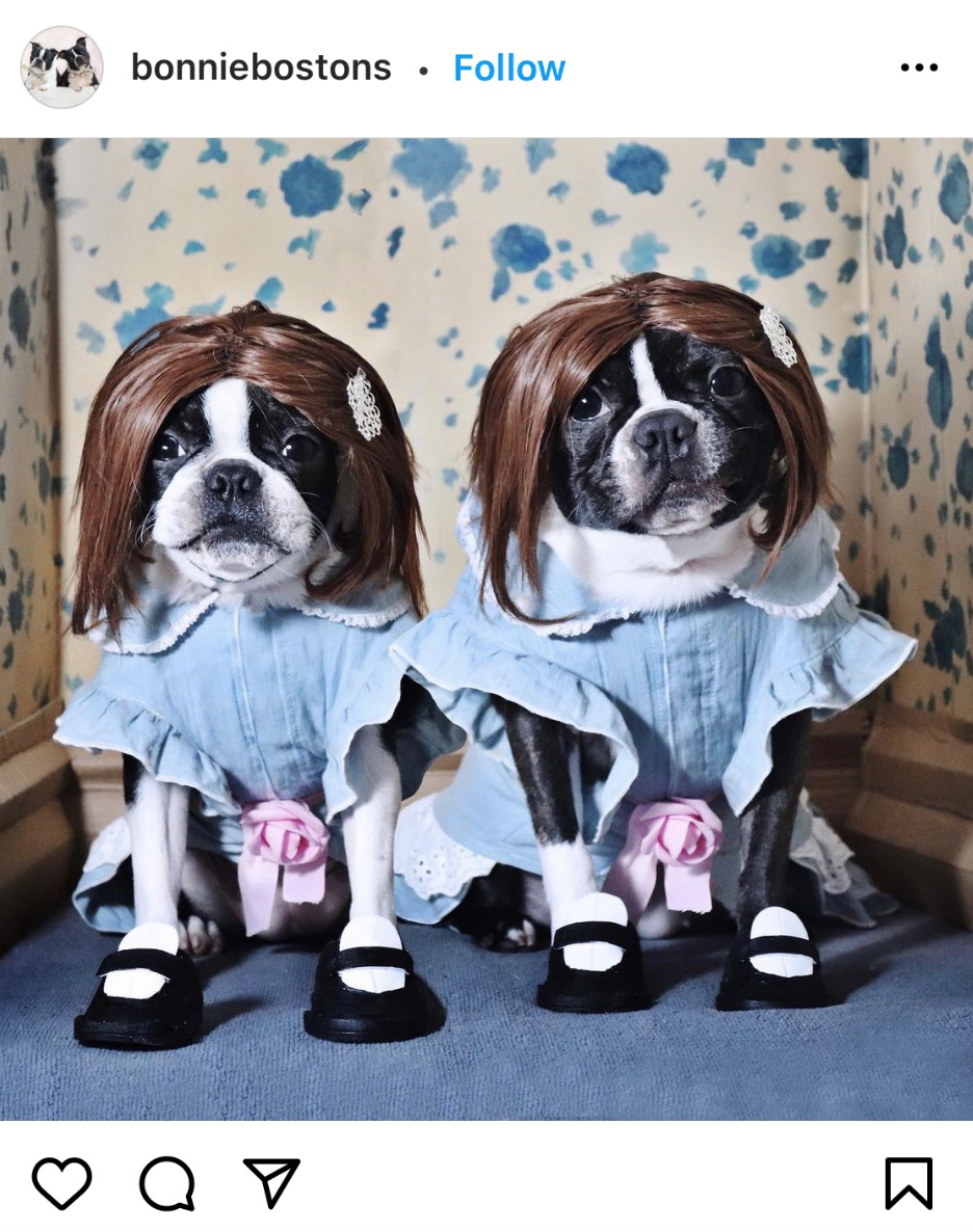 The Shining Twins Halloween Costume Ideas For Dogs