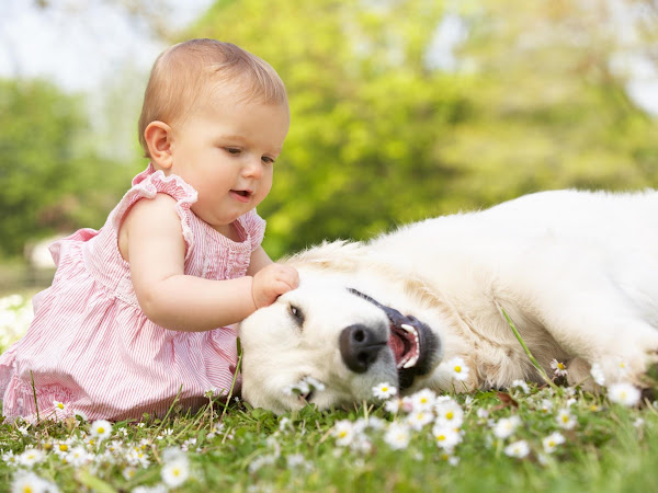 5 Tips For Getting A Dog When You Have Young Kids