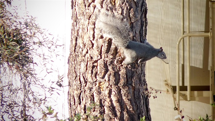 Squirrel On Trunk.jpg