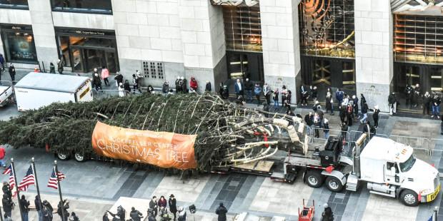 Hân hoan chào đón Giáng sinh, cây thông 2017 của Trung tâm Rockefeller đã có mặt