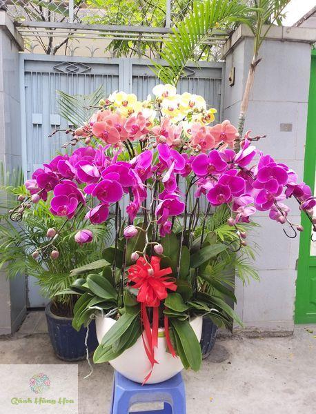hoa lan hồ điệp mix nhiều màu