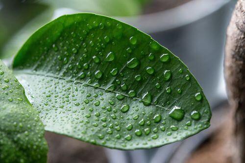 空氣中的濕氣示意圖
