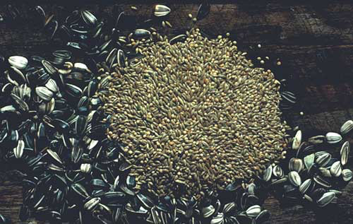 Sunflower seed, millet and canary seed are the historic staples of the bird food industry