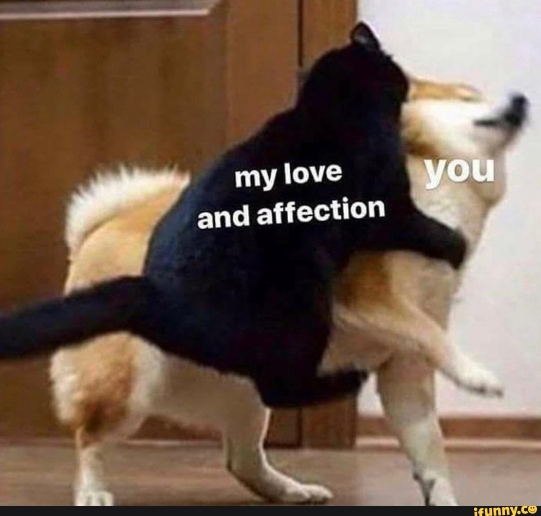 My Love and Affection Memes (5+ list)