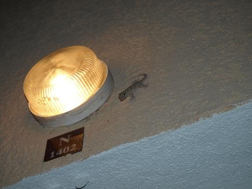 http://www.mw-xp.de/images/Korsika2011/mitbewohner.jpg