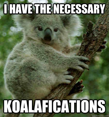 I have the necessary koalifications - Koalafied - quickmeme