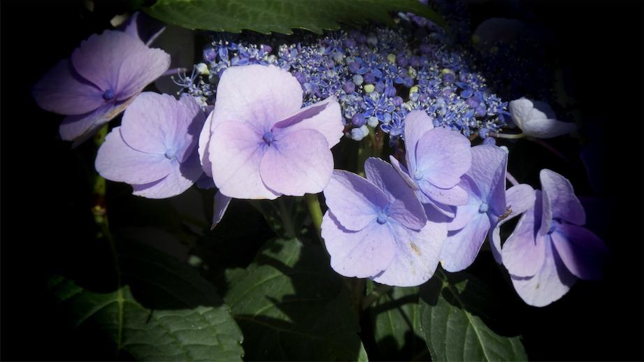 Purple 16x9.jpg