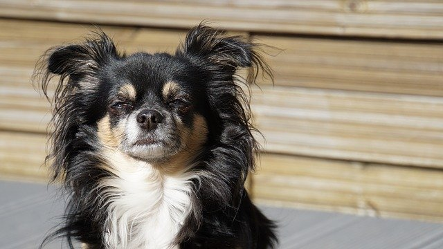 dog making a confused face
