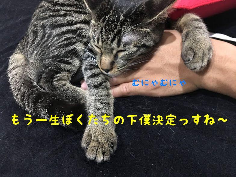 謎の猫派遣組織!?NNN(ねこねこネットワーク)とは・・これがNNNのやり方か!