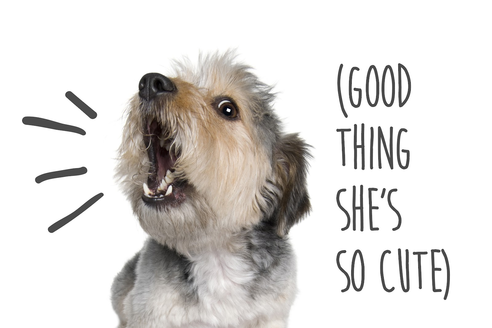 How to Quiet Dogs Who Bark