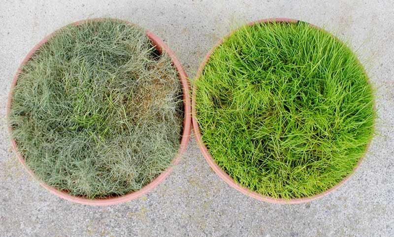 grasscomparisson_mycorrihizalfungi.jpg