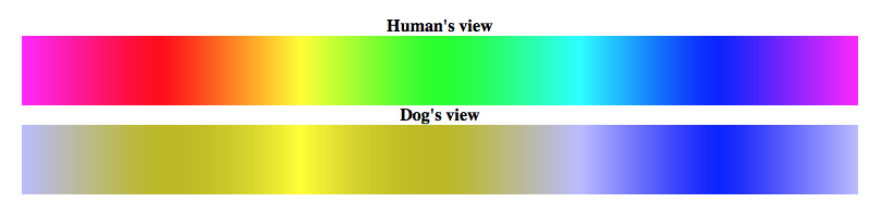 can dogs see color the dog color spectrum