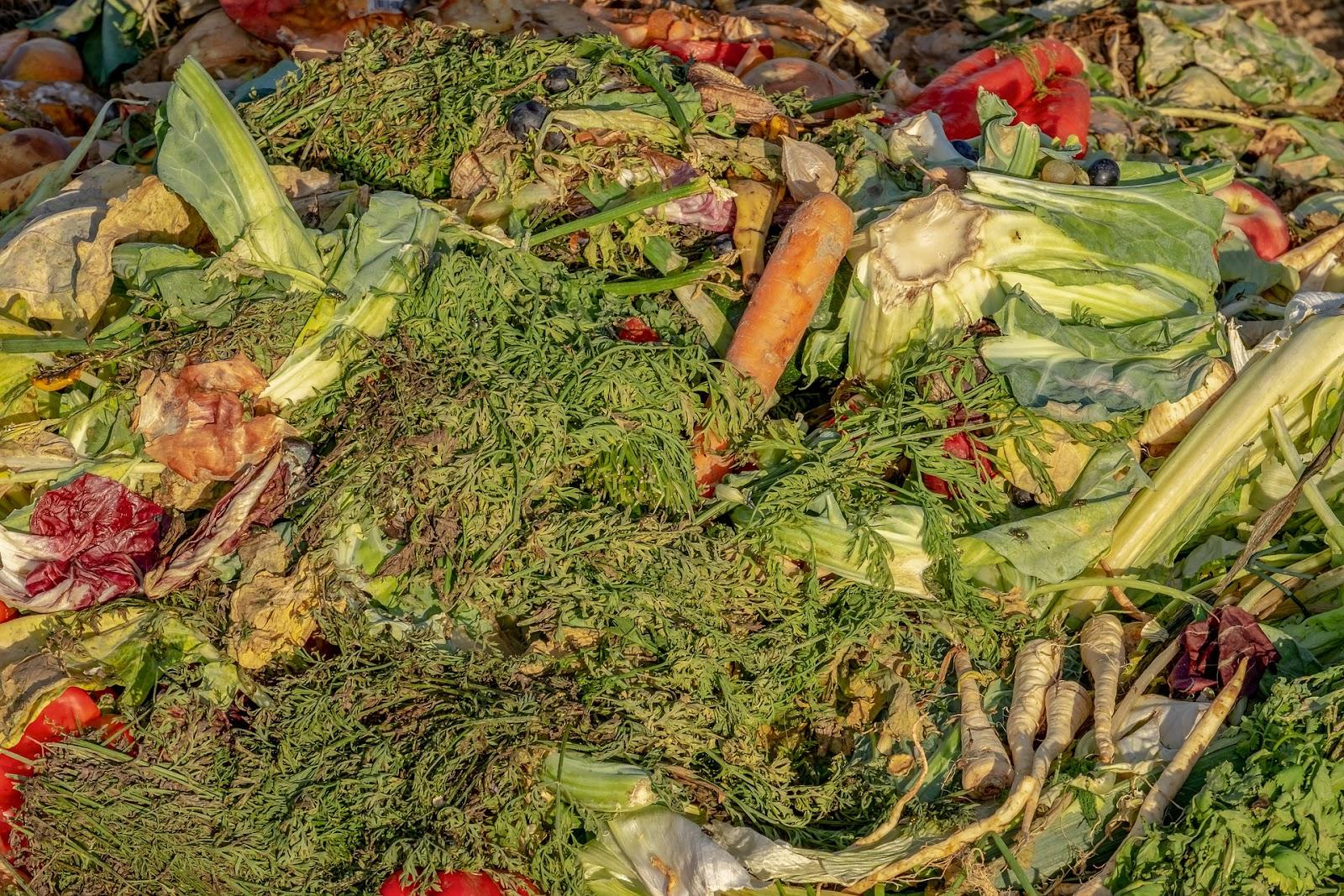 Residuos orgânicos podem se transformar em matéria para energia sustentável (Fonte: Pixabay)