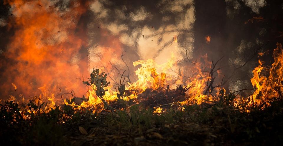 -incendio-amazonas-bosque-ONG-bolsonaro-brasil
