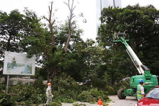 Cách lựa chọn đơn vị cắt tỉa cây xanh