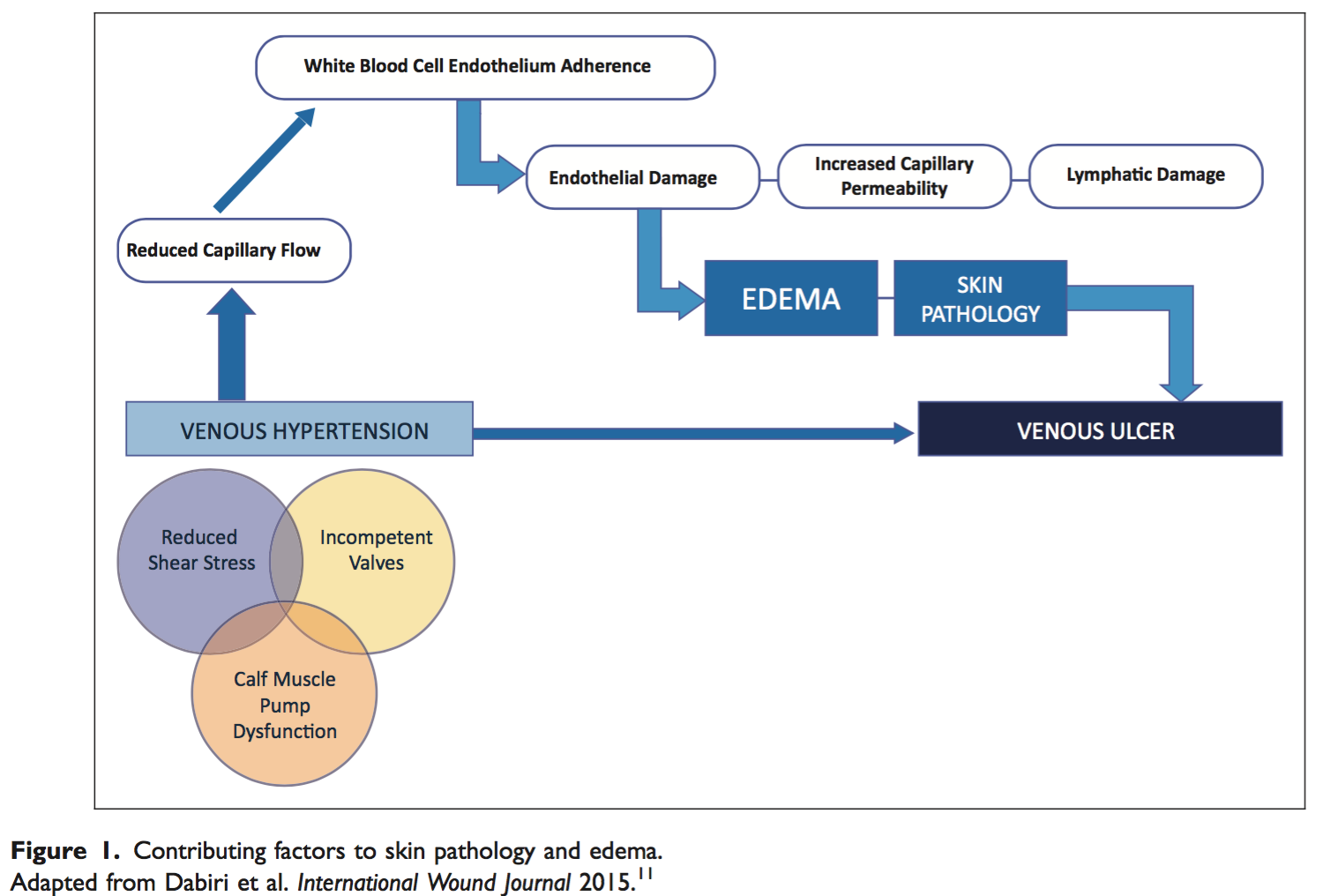 contributing factors to  skin pathology and edema