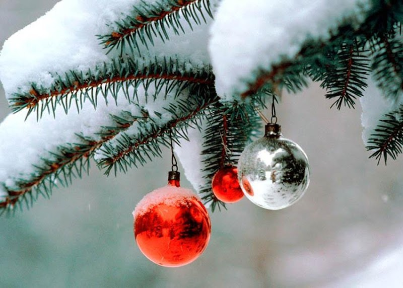 Έλατο- το δέντρο των Χριστουγέννων..και το ταξίδι του!!