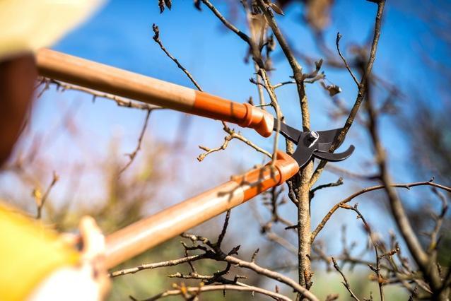 Pássaro pousado em galho de árvore  Descrição gerada automaticamente com confiança média