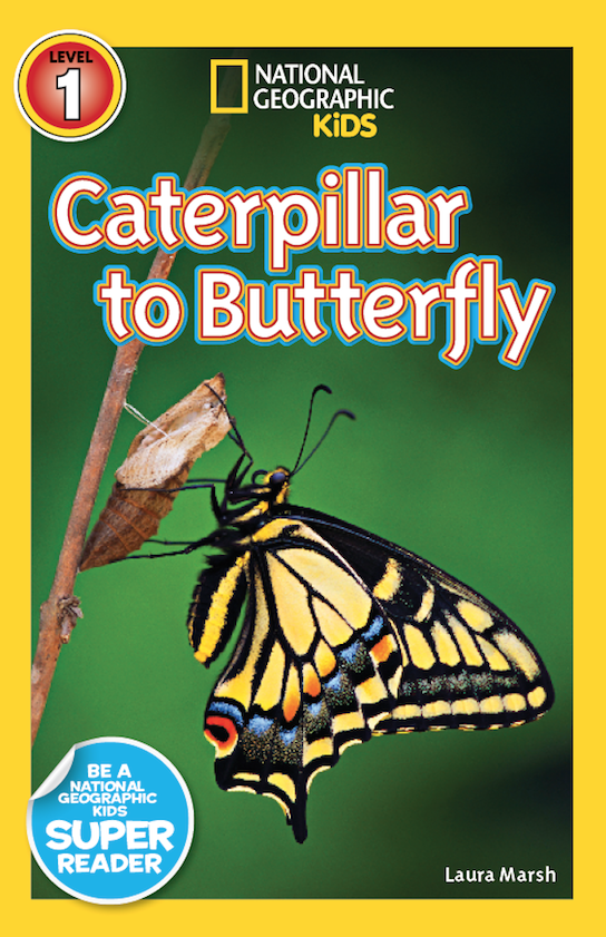 Caterpillar to Butterfly Cover