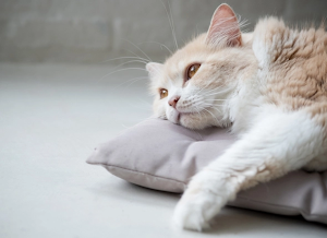 How to treat anemia in cats naturally