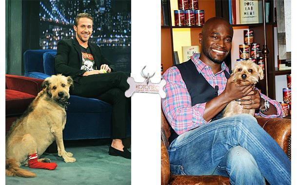 собаки знаменитых актеров и актрис