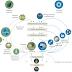 Circular Economy + Biomimicry