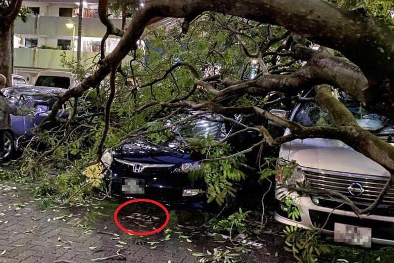 Parked car hit by fallen tree