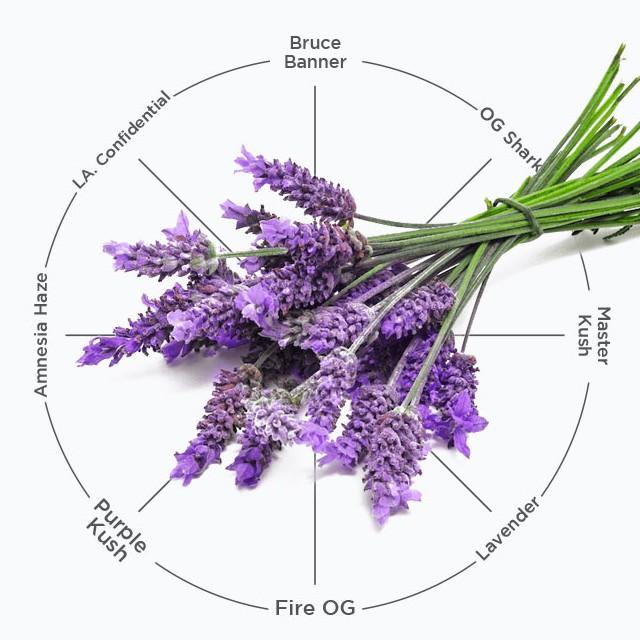 variedades cannabis con terpenos linalool