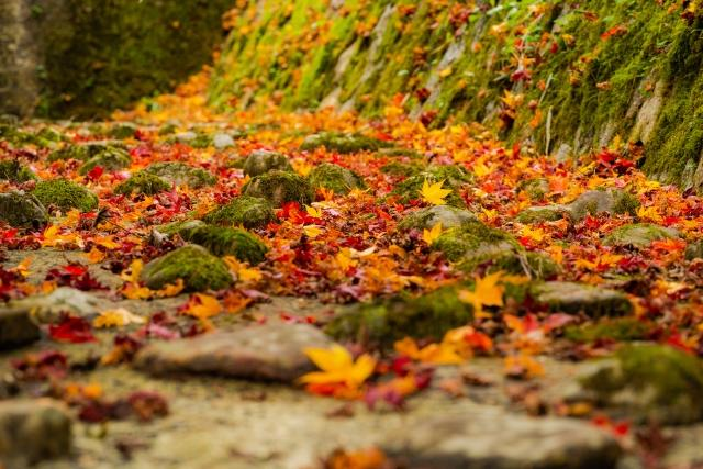 The fallen colored leaves.
