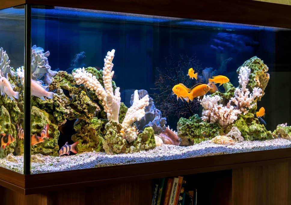 Top Trend in Fish Tank Market Size 2020 - Global Industry Revenue and  Upcoming Demand - PrnewsPrime