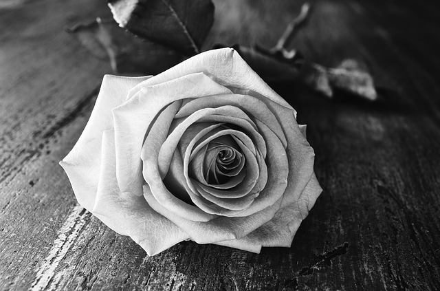 rose-1258992_640.jpg