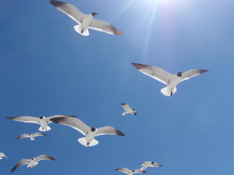 Seagulls-in-the-sky.jpg