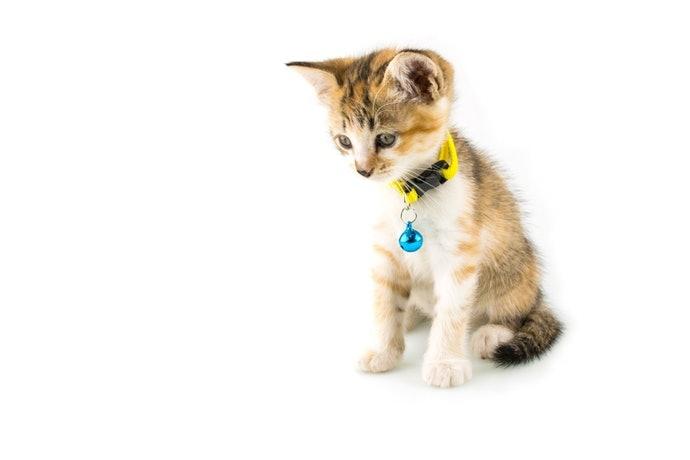 Top 10 vòng cổ cho mèo giá rẻ, chính hãng tốt nhất hiện nay 2020