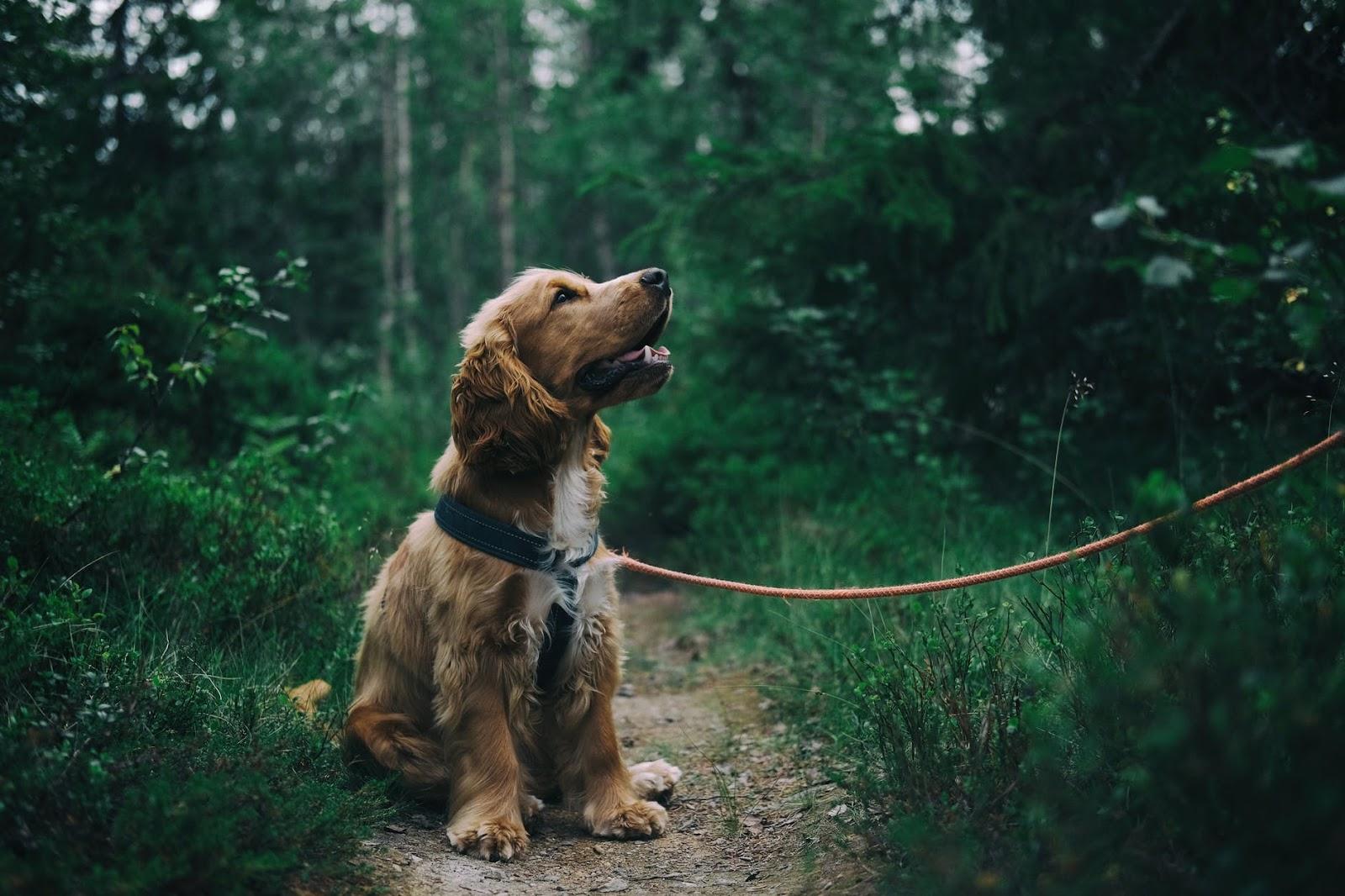 natural remedies for depression get a dog