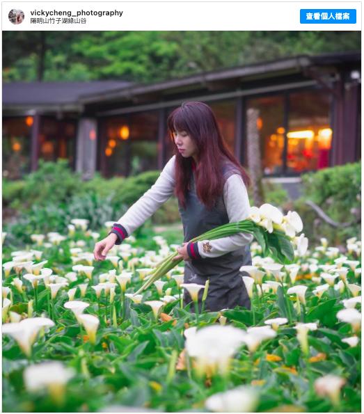 2021陽明山賞花 採海芋 推薦:竹子湖綠山谷,包含交通方式、開放時間