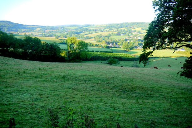 Fields at Dalwood lane - View south across the steep pasture fields towards the village of Dalwood whose houses are just visible in the early morning sun