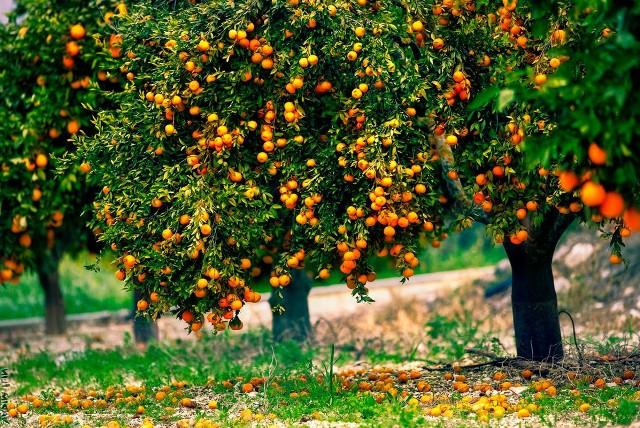 Как ухаживать за плодовыми деревьями летом