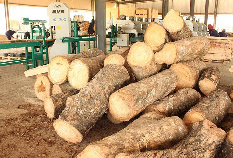 Nguyên Gỗ Bình Dương cung cấp gỗ cao su chất lượng cao