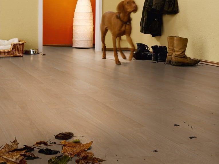 Chọn sàn gỗ công nghiệp cho nhà có thú cưng như thế nào?