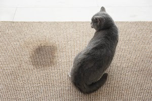 What should you do if your cat stops peeing