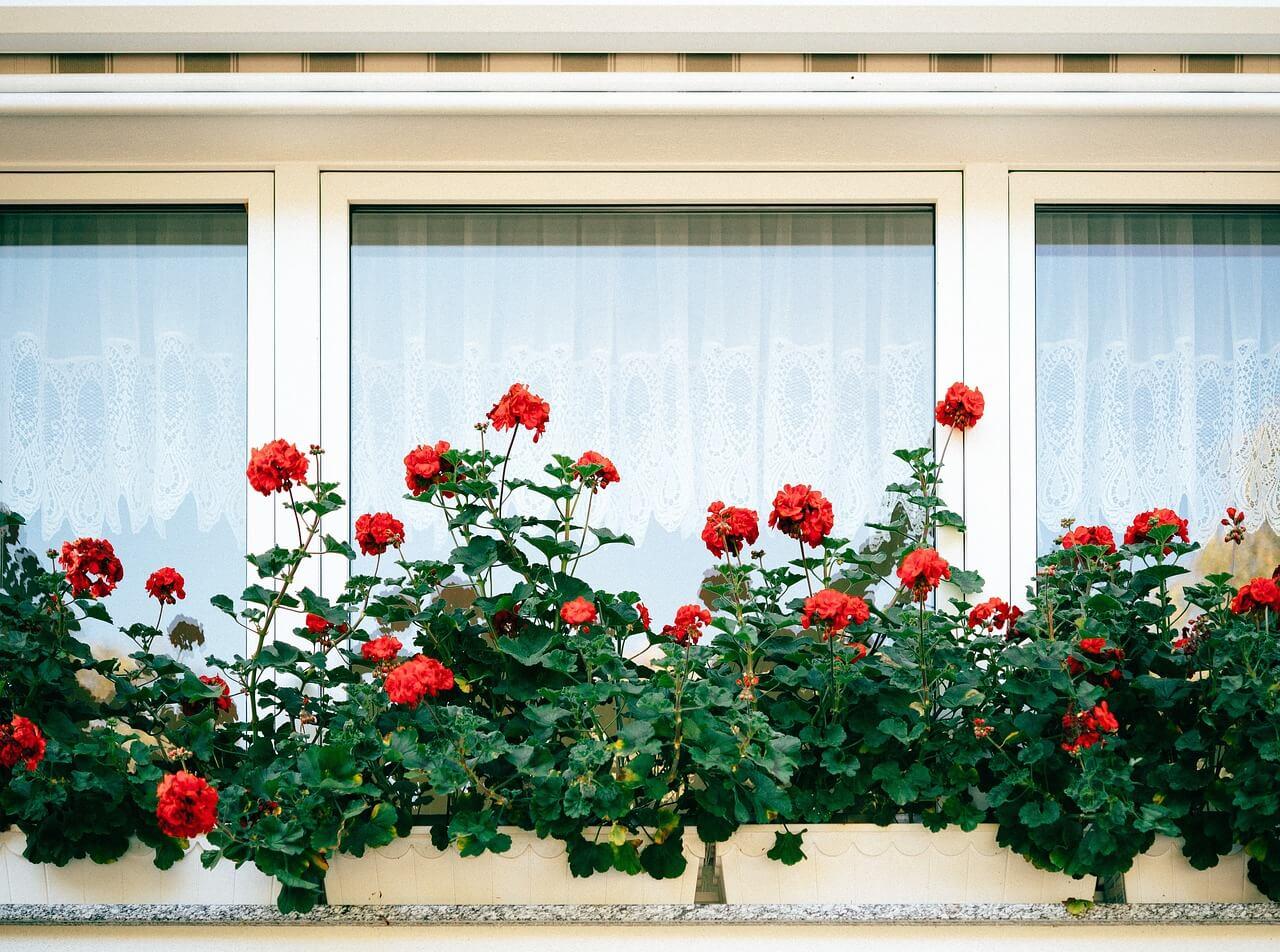 Plants on a window sill